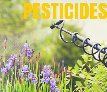 How Toxic Pesticides are Harming the Human and Bee Populations